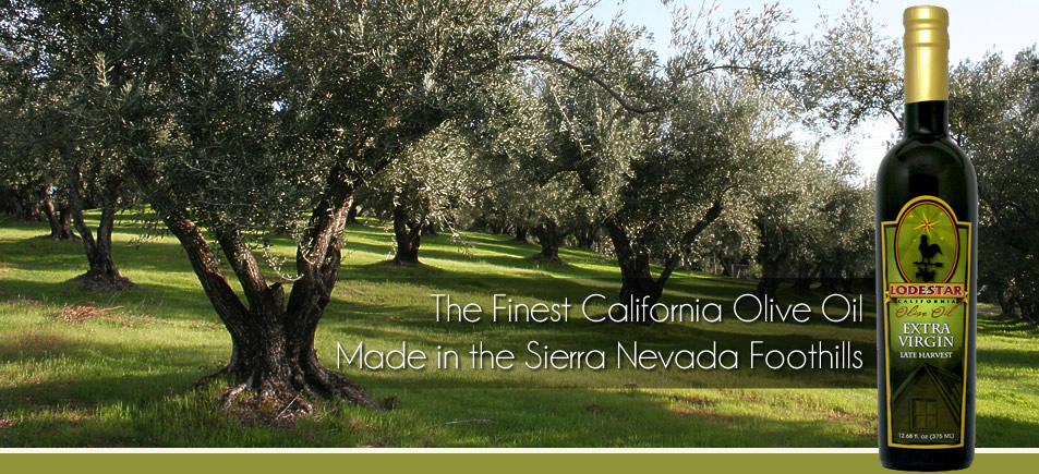 The Finest California Olive Oils Made in the Sierra Nevada Foothills